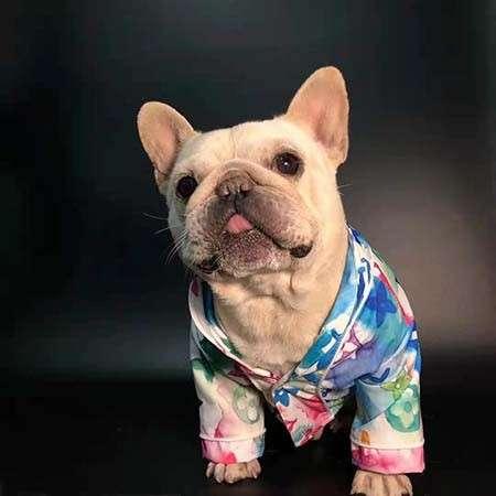 犬洋服 コットン ヴィトン